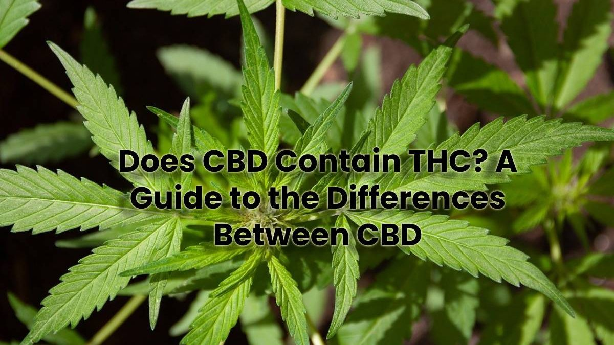 Does CBD Contain THC? A Guide to the Differences Between CBD
